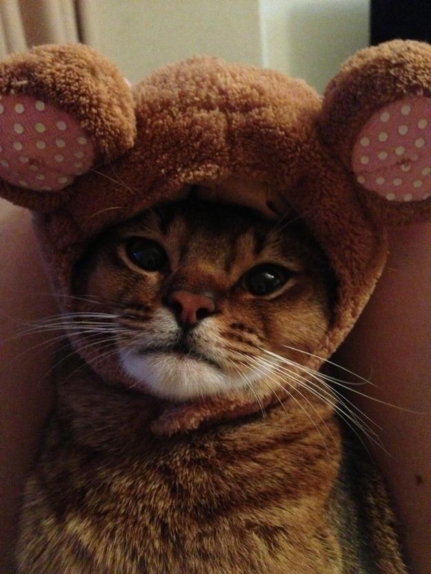 Adulto gatito gato traje humano