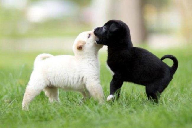 perrito negro besando a perrito blanco