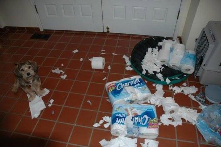 Pero deshizo el papel de baño