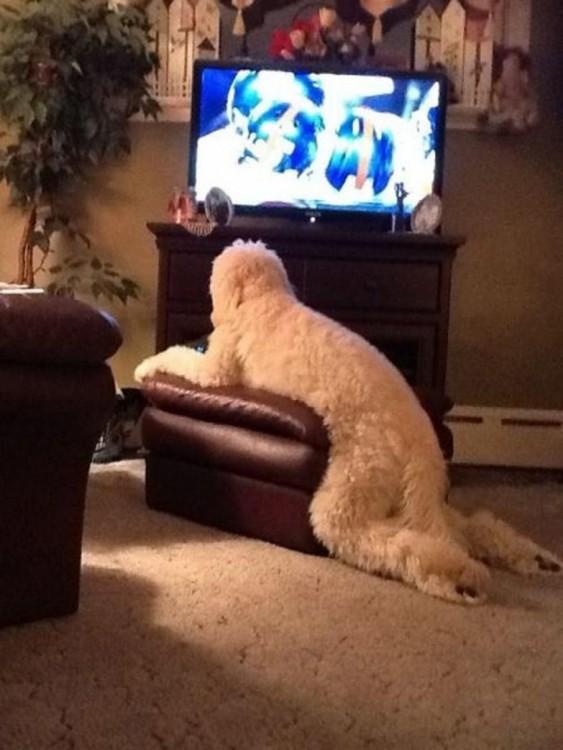 perro en una posición humana