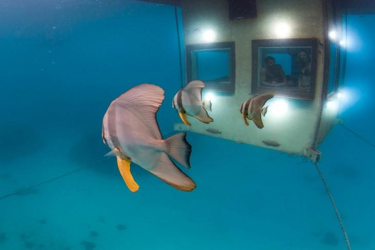peces nadando fuera de las ventanas de hotel subaquatico
