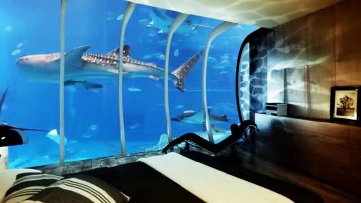 tiburon en la ventana hotel submarino en Zanaibar