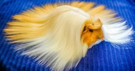 animales con un pelaje de ensueño