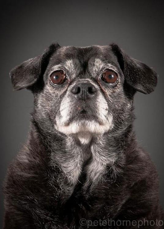 perro negro con cara de asustado