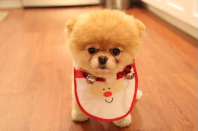 perrito con babero