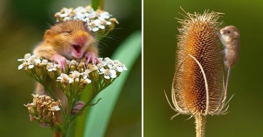 imagenes de ratoncitos