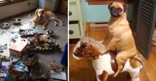 cosas que hacen los perros cuando no estas en casa