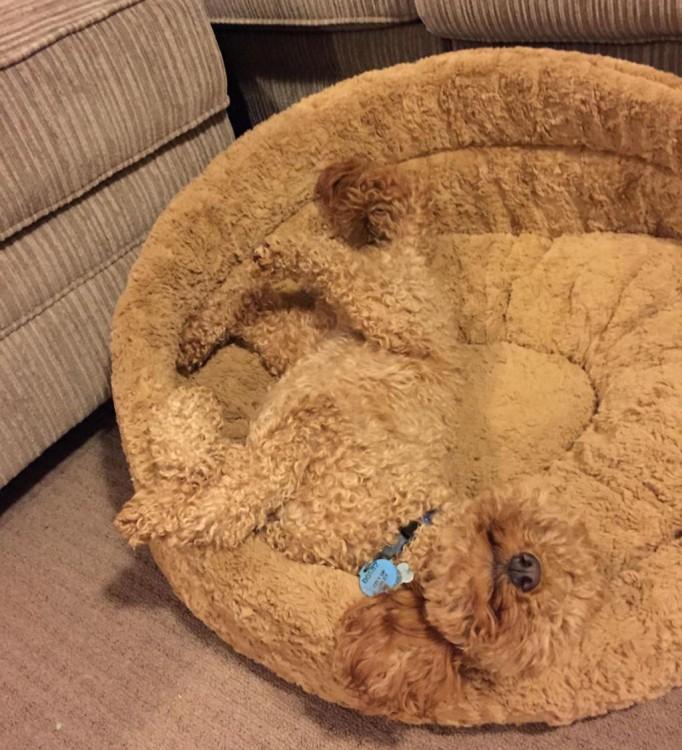 perro camuflado en su cama