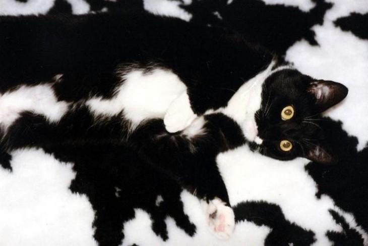 gato camuflado en la alfombra