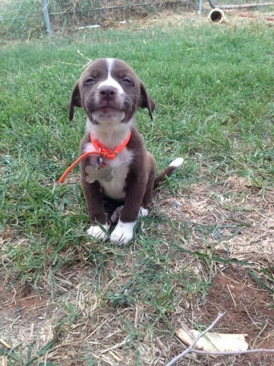 pequeño perrito sentando en el pasto