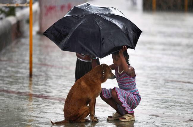 niña cubriendo de la lluvia con paraguas a un perro