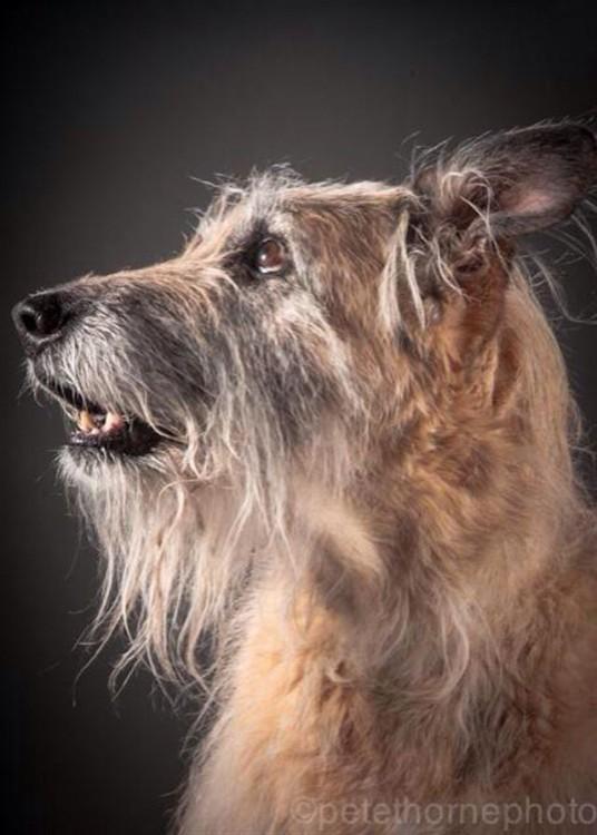 perro peludo con mancha blanca en el hocico de perfil