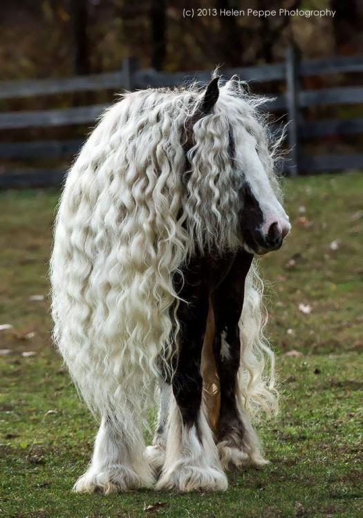 caballo con cabello largo blanco