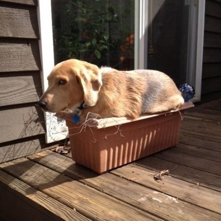 perro que se metió en una maceta