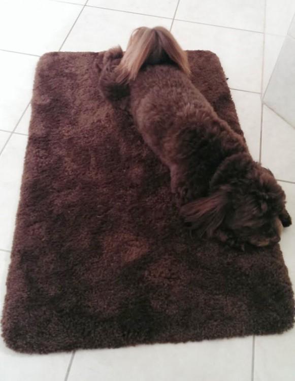 perro camuflado en felpudo