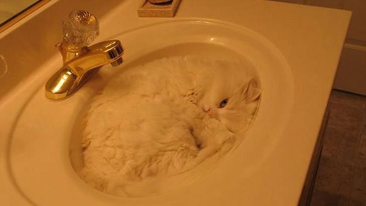 gato camuflado en el lavamano