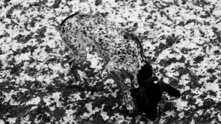 perro camuflado con el piso de nieve