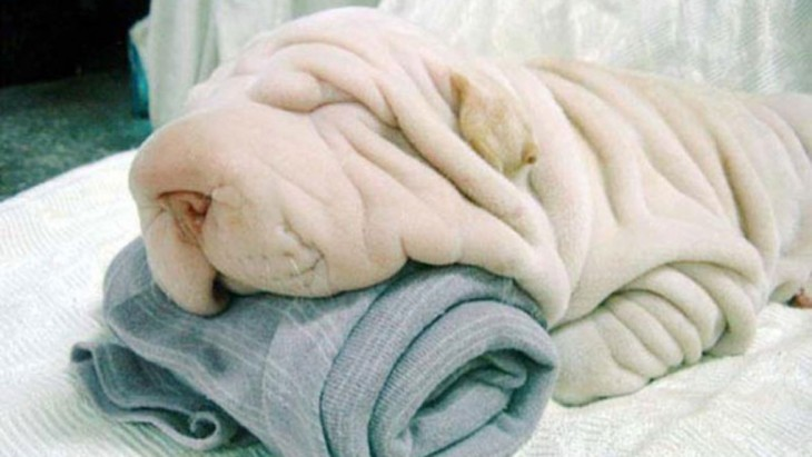 perro parece sabana