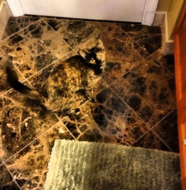 gato camuflado en el piso