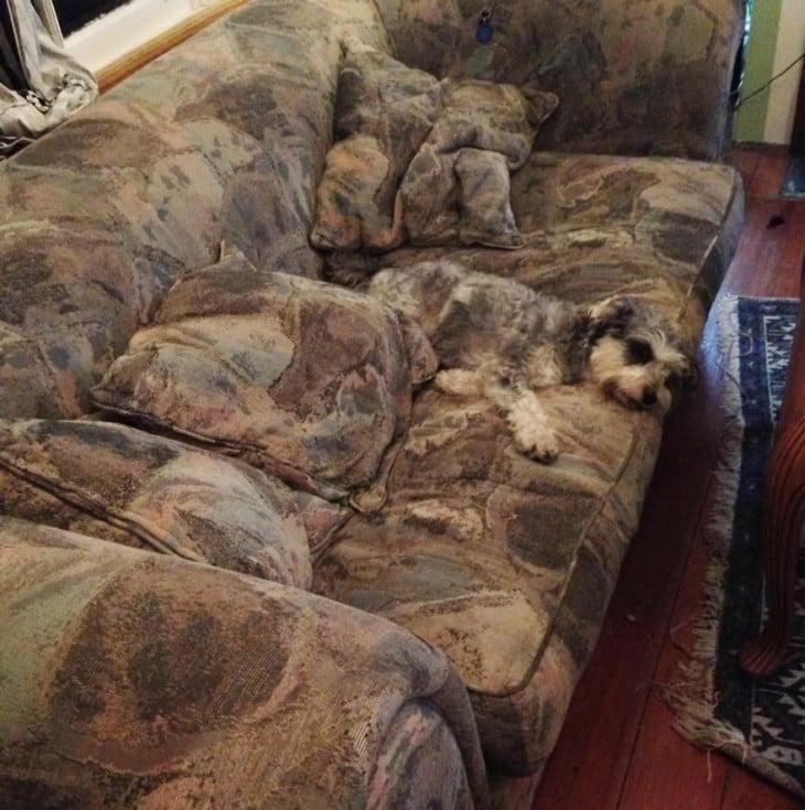 perro camuflado en el sillon