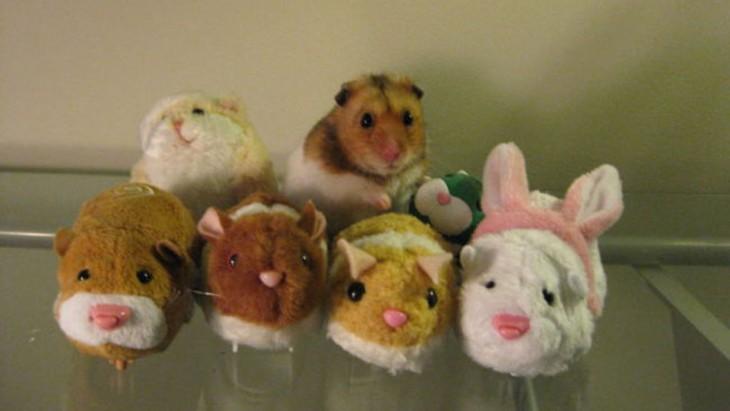 hamster camuflado con peluches de animales