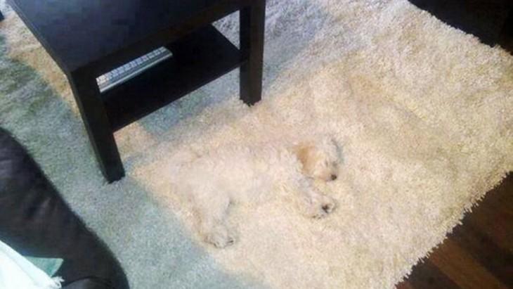 perro camuflado en la alfombra
