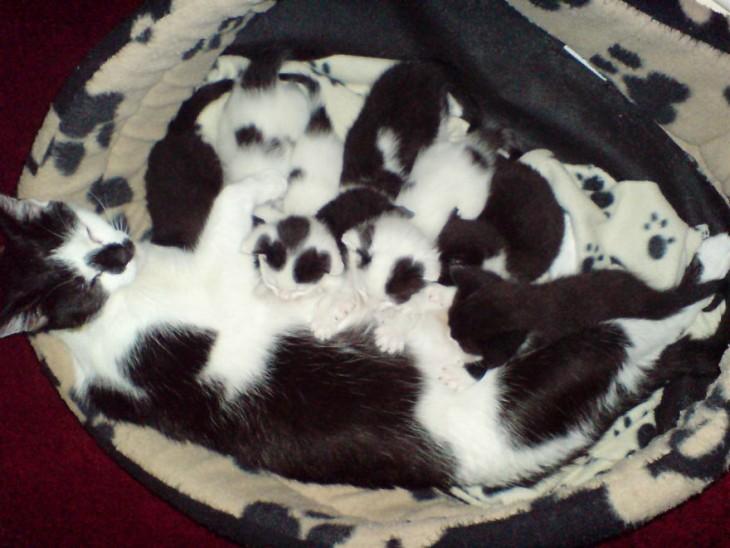 gato blanco y negro camuflado