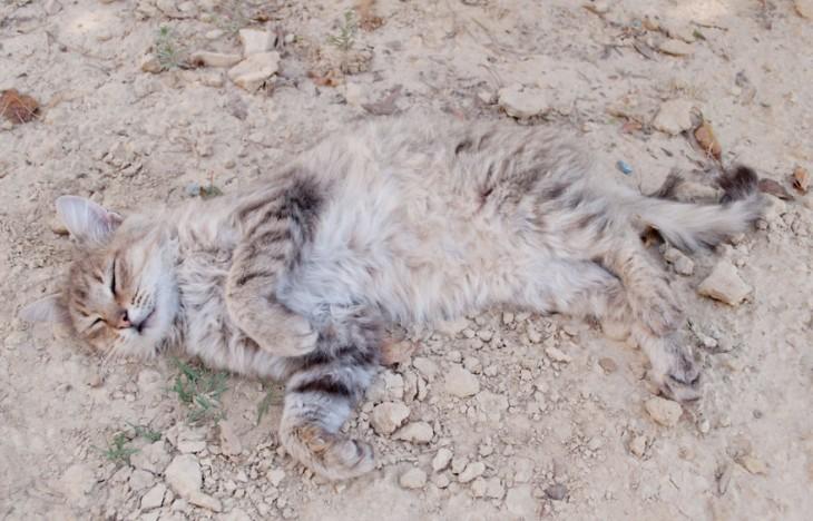 perro camuflado con piso de arena
