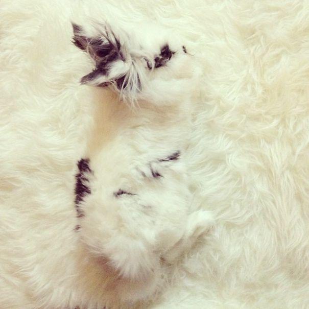 perrito camuflado en alfombra