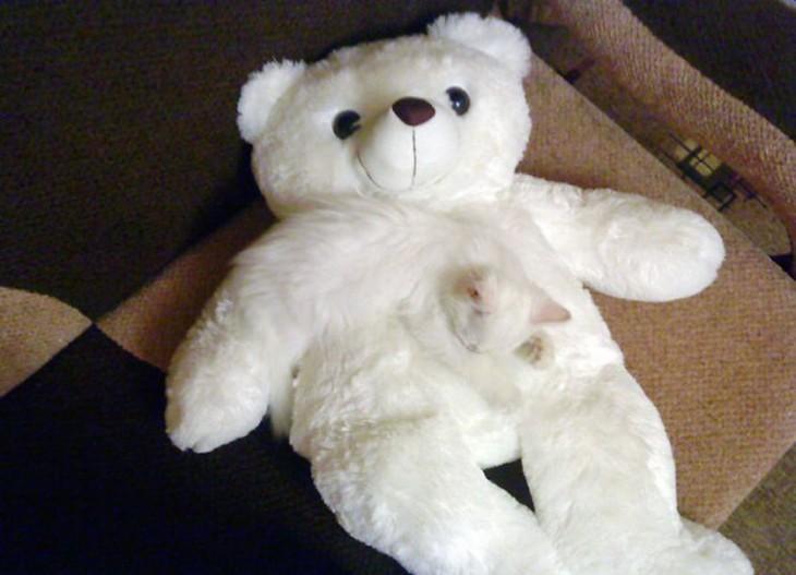 gato blanco camuflado en peluche blanco