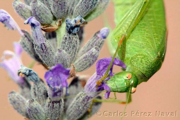 insecto en las flores de una planta