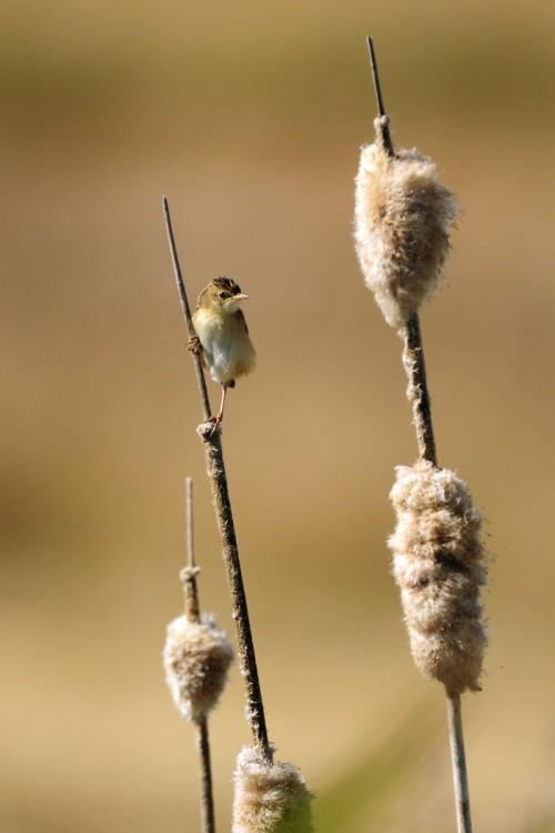 pajarito al lado de su nido