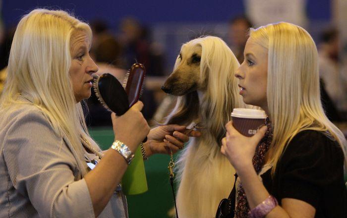 perro que con cabello lacio que se parece a su dueña