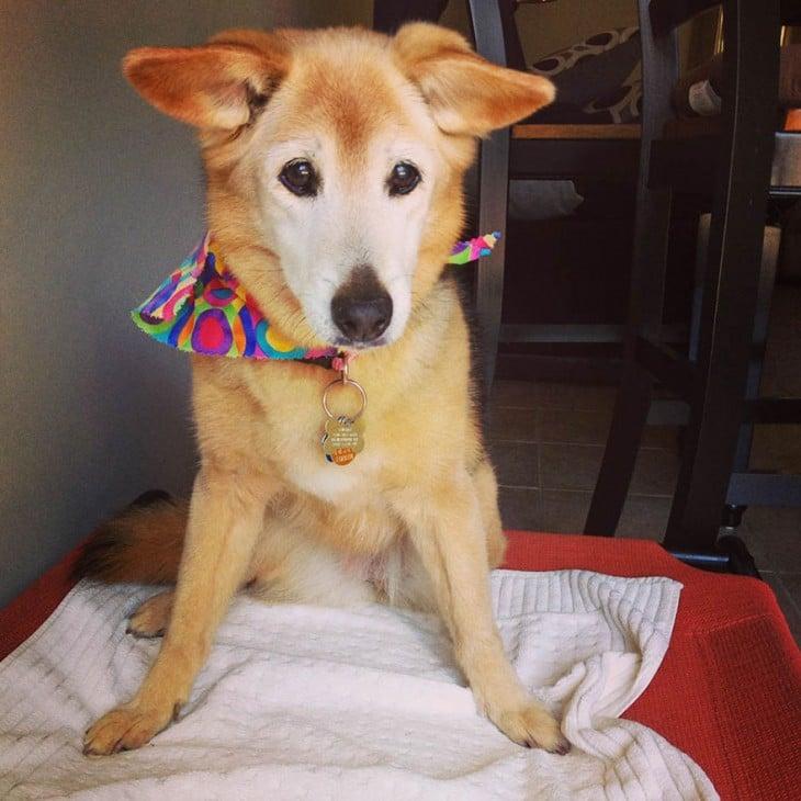 perrito con su collar de colores