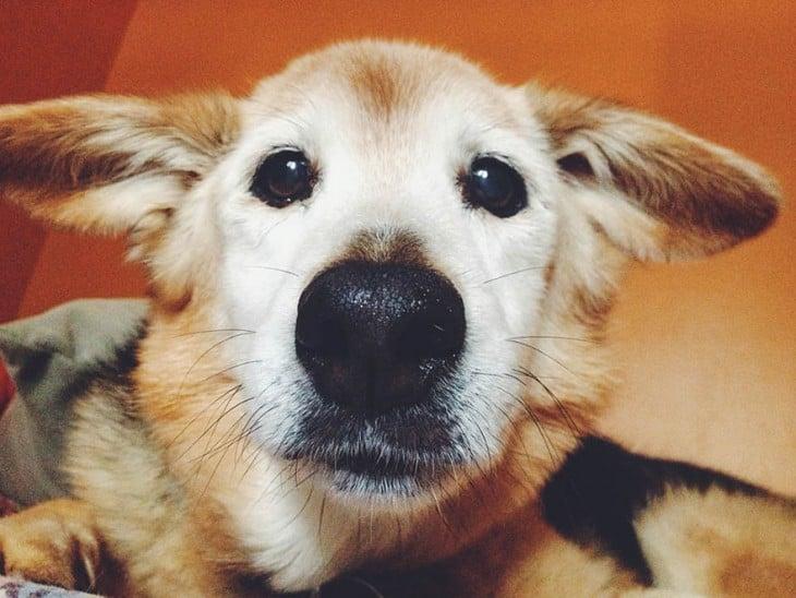 una fotografía de la cara de su perrito