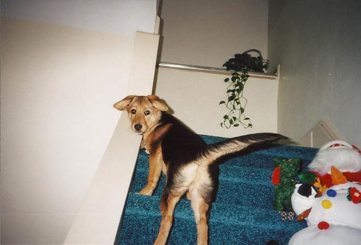 perrito subiendo las escaleras
