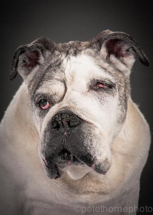 perro blanco con negreo sin un ojo