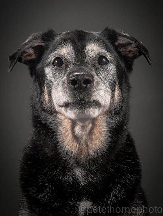 perro negro con mirada triste