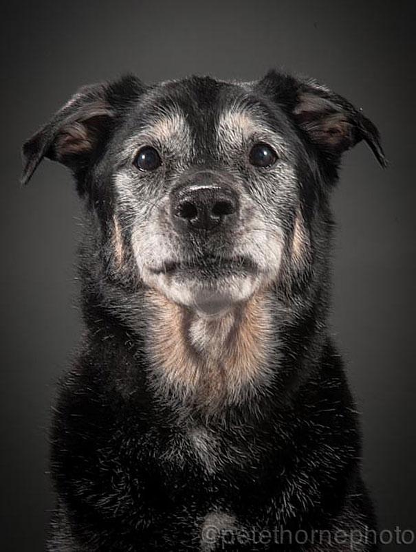 Fotografias De Perros Ancianos Que Nos Muestran Su Belleza