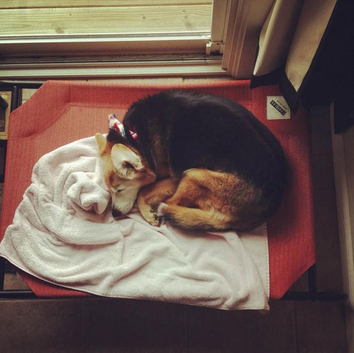 perro dormido con pañoleta en el cuello