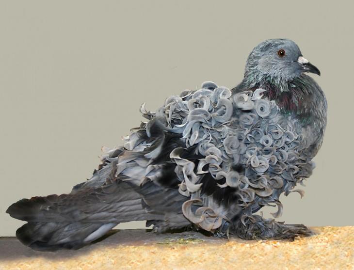 paloma con plumas en forma circular
