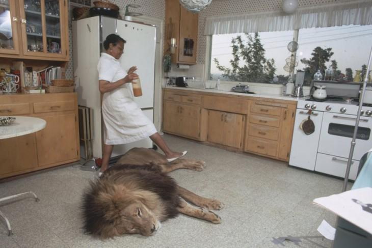 la sirvienta pasa a un lado del leon que esta acostado en la cocina