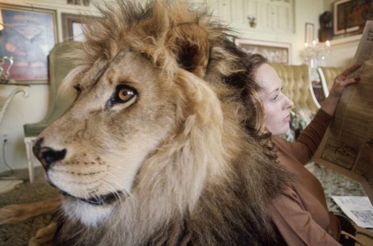 leon echado y una señora recargada en su cuerpo