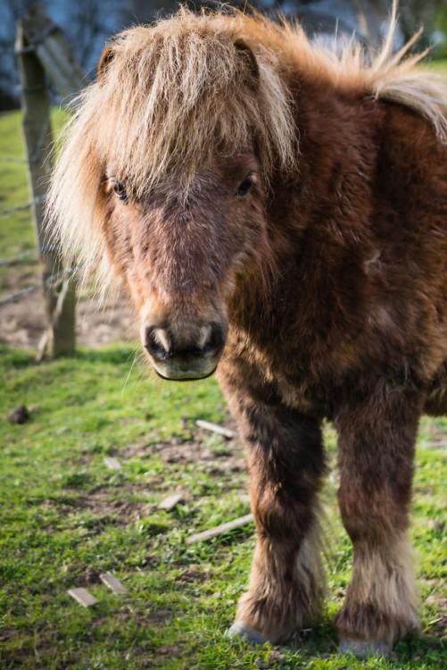 pony peludo