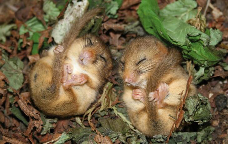 2 ratoncitos durmiendo