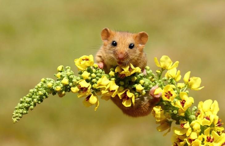 ratón en flores