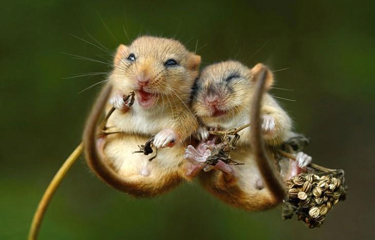 dos ratoncitos colgados