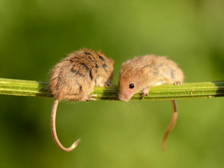 raton feliz (25)