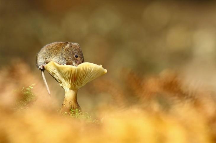 ratón arriba de una flor