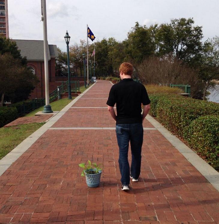 paseando a una planta